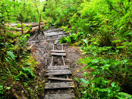 Photo for old rundown path along the west coast trail on Vancouver Island, Canada - Royalty Free Image