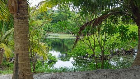 Foto de tropical green pond on koh rong samloem island in cambodia - Imagen libre de derechos