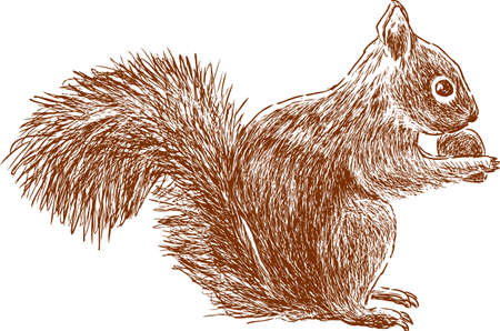 Illustration pour A forest squirrel eats a nat. Vector illustration. - image libre de droit