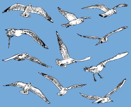 Ilustración de Seagulls in flight on plain background - Imagen libre de derechos
