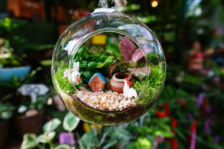 Photo for Terrarium - Royalty Free Image