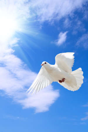 Photo for a free flying dove under the blue sky  - Royalty Free Image