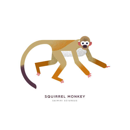 Illustration pour Squirrel monkey animal illustration on isolated white background. Educational wildlife design with fauna species name label. - image libre de droit