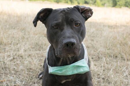 Photo pour Dog with Surgical Mask - image libre de droit