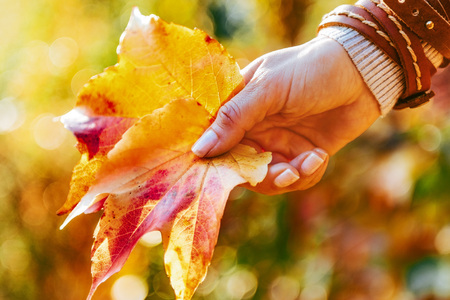 Photo for Closeup on woman holding autumn leaf - Royalty Free Image