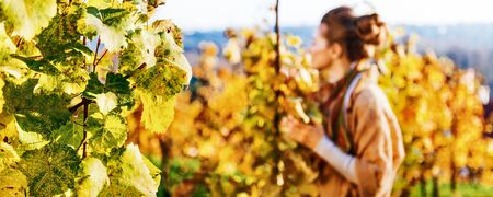 Photo for Closeup on grape branch and young woman in autumn vineyard in background - Royalty Free Image