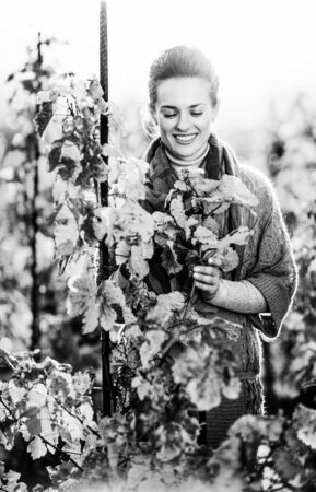 Photo for Happy young woman standing in autumn vineyard and looking on branch - Royalty Free Image
