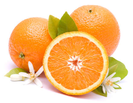 Oranges on white ground