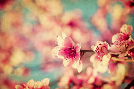 Foto de Grunge pink peach flowers close up in a garden - Imagen libre de derechos