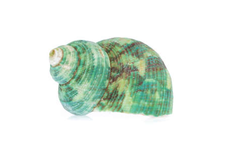 Photo for beautiful sea shell isolated on white background - Royalty Free Image