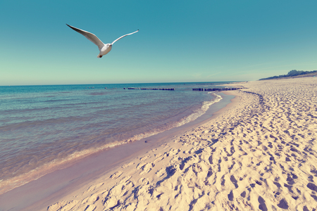 Foto de Baltic sea beach landscape with blue sea white sand and seagull - Imagen libre de derechos