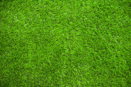Photo pour Green grass background - image libre de droit