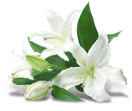 bouquet of white lilies is isolated on white background