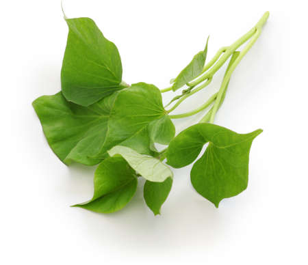 Photo for sweet potato leaves on white background - Royalty Free Image