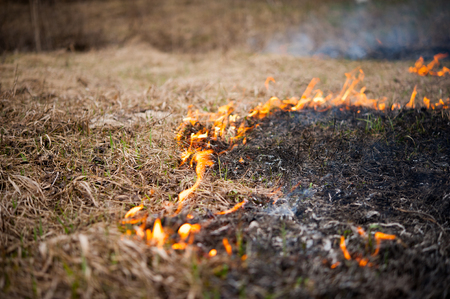 Photo for The grass burns, the fire, the scorched earth, ecology - Royalty Free Image
