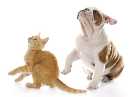 adorable kitten and puppy looking up with scared expressions with reflection on white background