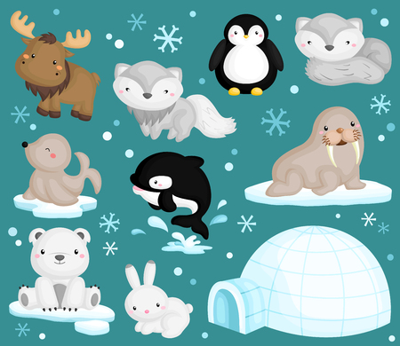 Photo for Arctic Animal Vector Set - Royalty Free Image