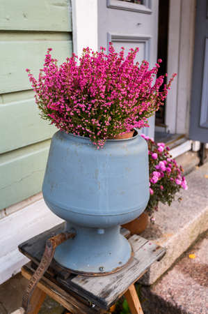 Photo pour Erika pink in a red pot on the street - image libre de droit