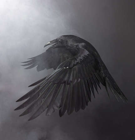 Foto de Big Black Raven in the smoke - Imagen libre de derechos