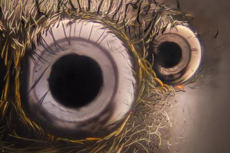 Foto de Extreme magnification - Jumping spider eyes at 20x - Imagen libre de derechos