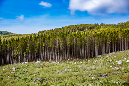 Photo for Deforestation in Norway - Royalty Free Image