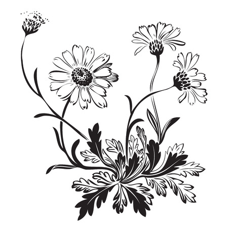 Illustration pour Hand drawn bouquet of chamomile flowers isolated on white background, black and white colors. Vector illustration - image libre de droit