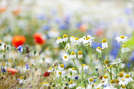 Foto de abundance of blooming wild flowers on the meadow at spring time - Imagen libre de derechos