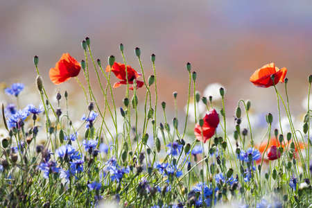 Photo pour abundance of blooming wild flowers on the meadow at springtime - image libre de droit