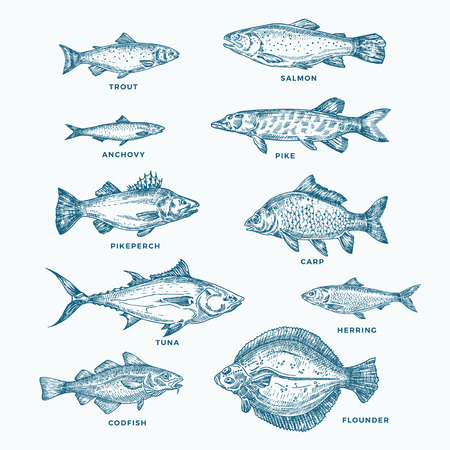 Illustration pour Hand Drawn Ocean or Sea and River Ten Fishes Set. A Collection of Salmon and Tuna or Pike and Anchovy, Herring, Trout, Carp Sketches Silhouettes. - image libre de droit