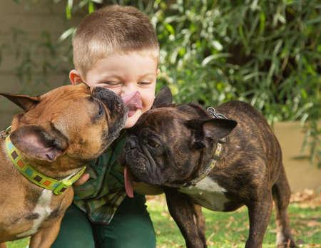 Photo pour Two bulldogs licking little boy sitting outdoors - image libre de droit