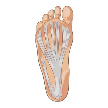 Ilustración de Foot sole illustration. Colored vector isolated on white. - Imagen libre de derechos