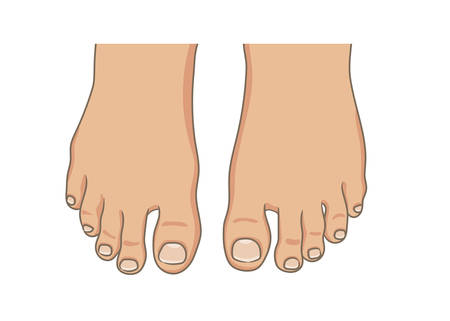 Ilustración de Female or male foot sole, barefoot, top view. Toenails with pedicure.Vector illustration, hand drawn cartoon style isolated on white. - Imagen libre de derechos