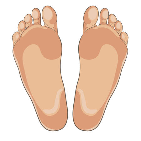 Ilustración de Left and right foot soles illustration for footwear, shoe concepts, medical, health, massage, spa, acupuncture centers etc. Realistic cartoon style, colored with skin tones. Vector isolated on white. - Imagen libre de derechos