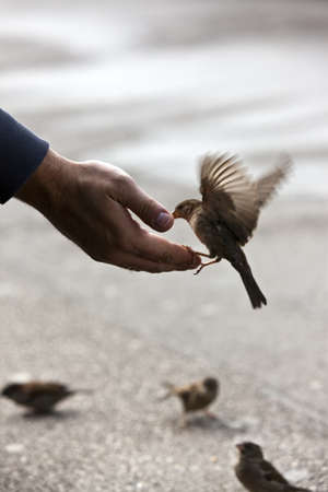 Photo pour Bird feeding hand with wonderful available light after some rain - image libre de droit