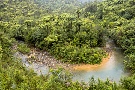 Meander in a Rainforest River, Northland New Zealand