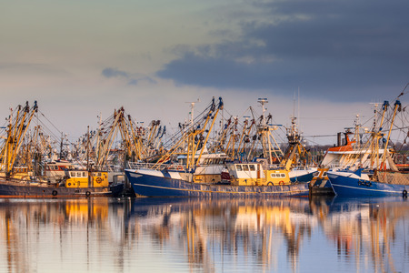 Photo pour Lauwersoog harbours one of the biggest fishing fleets of the Netherlands. The fishery concentrates mainly on the catch of mussels, oysters, shrimp and flatfish in the Waddensea - image libre de droit