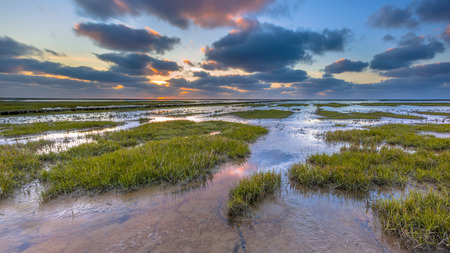 Photo pour Wadden sea mud-flats of a tidal marsh where new land is being created on the Groningen coast in the Netherlands - image libre de droit