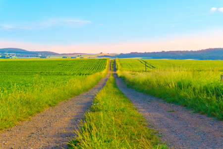 Photo for Road in the middle of a field - Royalty Free Image