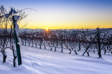 Photo pour Vineyards of Barolo in the hills of Langhe, (Piedmont, Italy) at sunset. Countryside and rows covered by the snows of december - image libre de droit