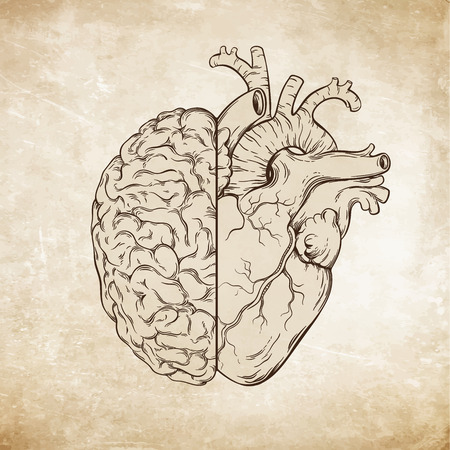 Ilustración de Hand drawn line art human brain and heart. Da Vinci sketches style over grunge aged paper background vector illustration. Logic and emotion priority concept. - Imagen libre de derechos
