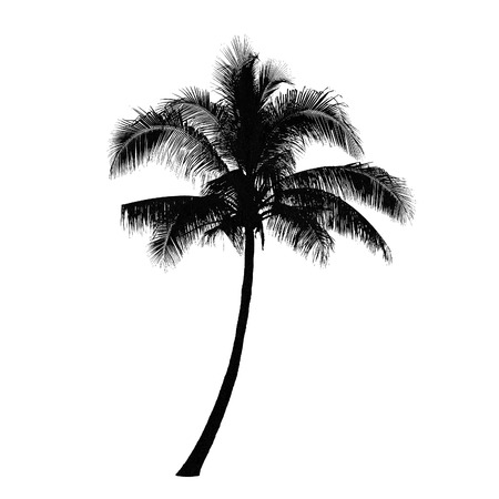 Illustration for Coconut palm tree silhouette, Vector - Royalty Free Image