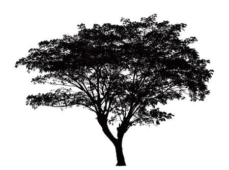 Illustration pour Tree silhouette : Samanea saman - image libre de droit