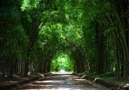Photo for Tunnel bamboo tree - Royalty Free Image