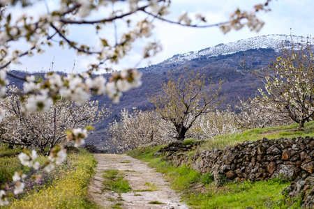 Photo pour Countryside road in Valle del Jerte Valley in Extremadura in Spain - image libre de droit