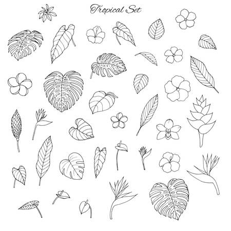 Ilustración de Hand drawn tropical set with monstera and banana leaves, hibiscus, heliconia, plumeria, anthurium, orchid  and bird of paradise flowers isolated on the white background. Exotic elements for your design. Usable for coloring books. - Imagen libre de derechos