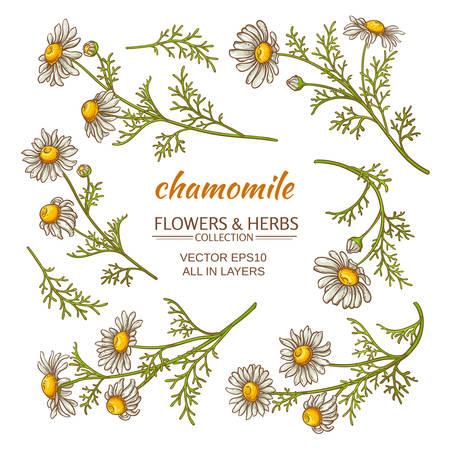 Illustration pour chamomile flowers vector set on white background - image libre de droit