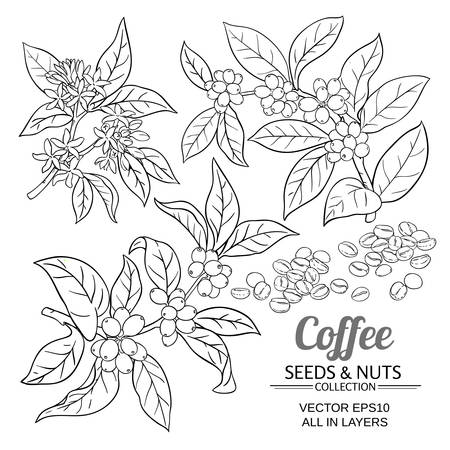 Illustration for coffee vector set - Royalty Free Image