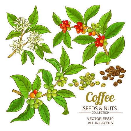 Illustration for Coffee vector set icon. - Royalty Free Image