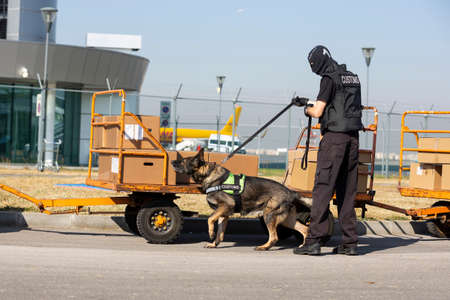 Foto de Customs and border protection officer and Drug enforcement administration special force participates with a specialized dog in a training at the airport for searching and seizing of illegal drugs. - Imagen libre de derechos