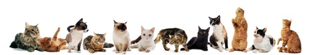 cats and kitten on a white background